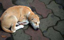 АБХАЗИЯ: В Гагре произошло массовое истребление бродячих собак